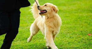 Urlaub mit Hund in Niederlande