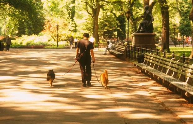 Urlaub mit Hund in den USA