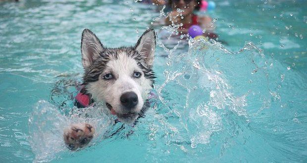 Urlaub mit Hund in der Türkei